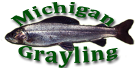 Michigan Grayling